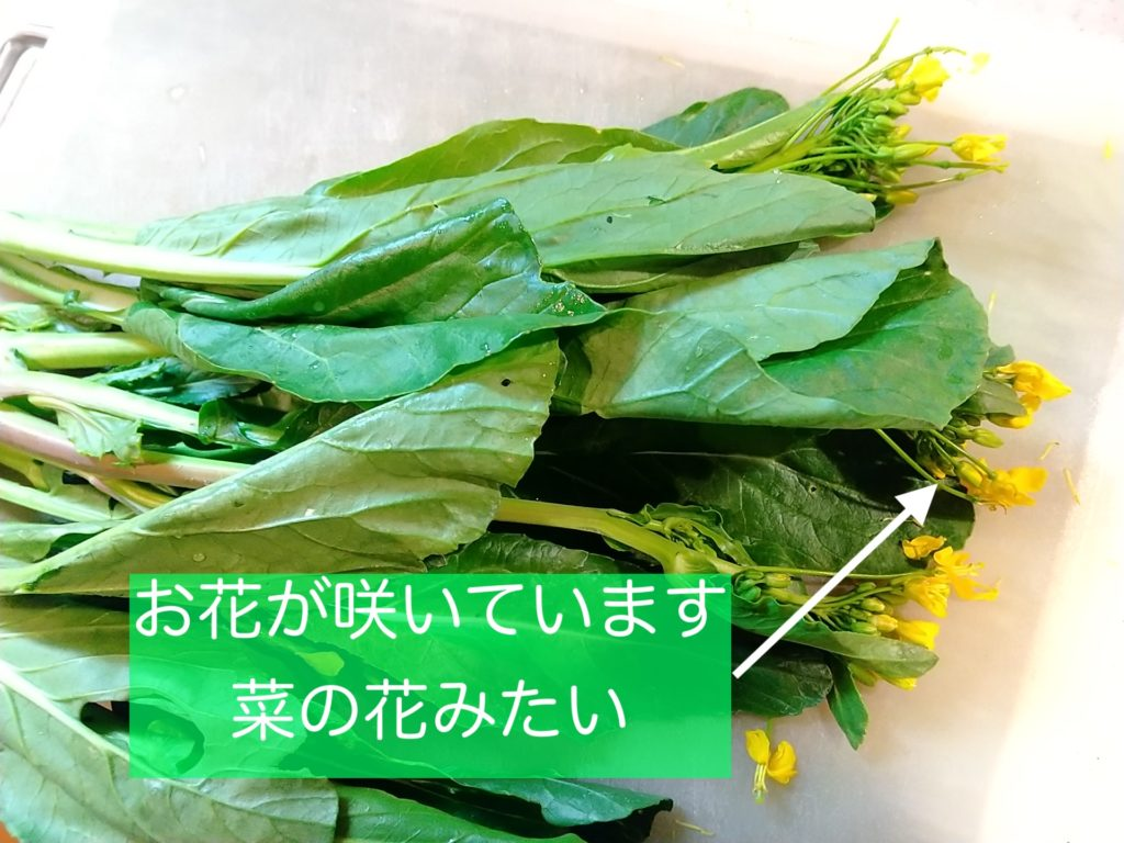 アスパラ菜