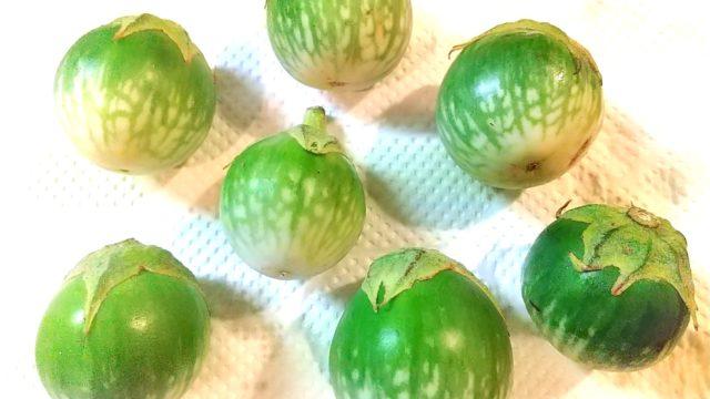 タイ茄子(マクアポ)